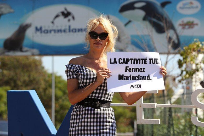 En août dernier, l'actrice Pamela Anderson avait manifesté, avec l'association Peta, contre la captivité des animaux devant Marineland, à Antibes.