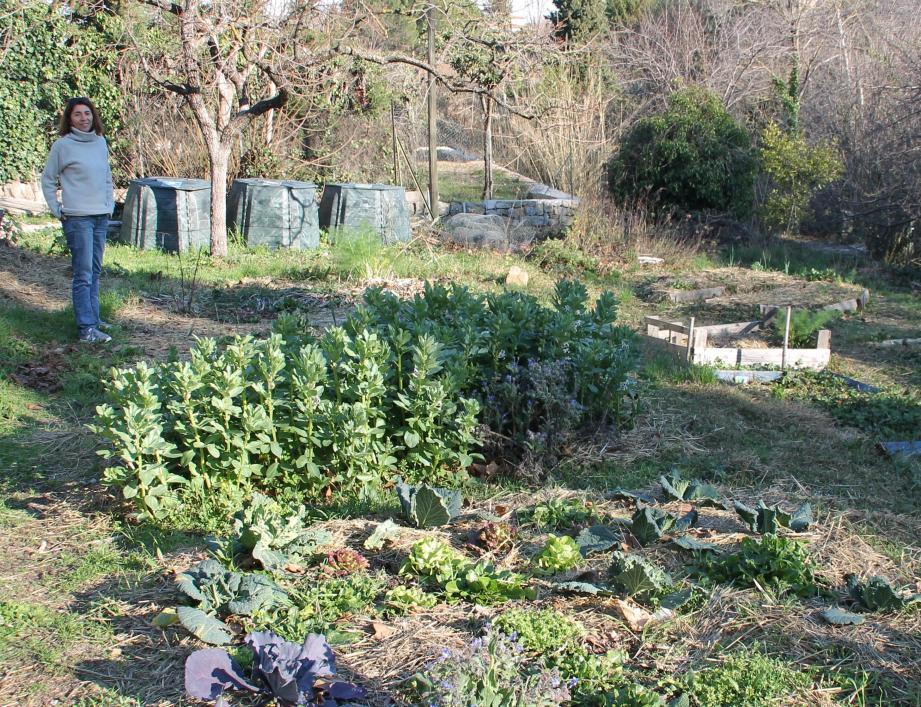 Sur l'une des restanques, les fèves sont déjà plantées, la récolte s'annonce fertile.