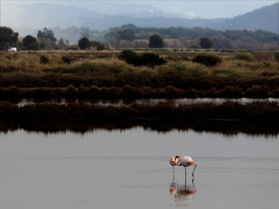 Des espèces uniques au cœur du site naturel hyérois.