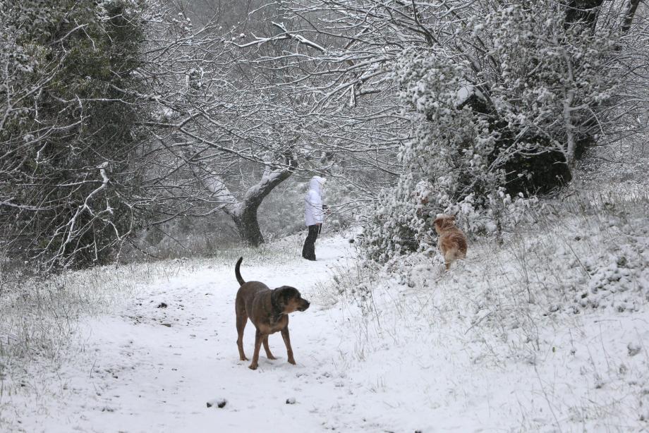 La campagne gardoise a fait le bonheur de ses habitants, chiens compris !
