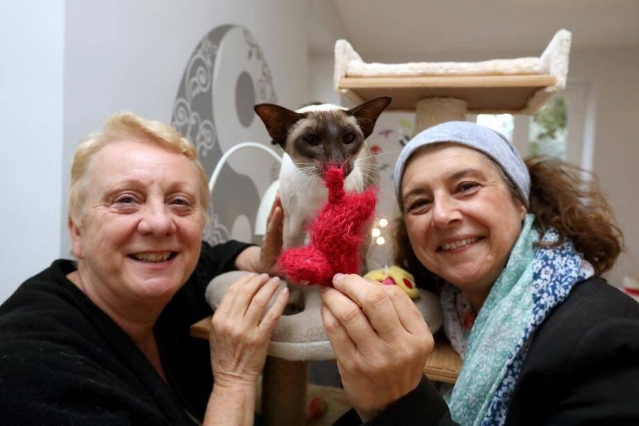"""Ce chat, sur qui sa propriétaire menait des """"expériences"""", a pu être sauvé par les bénévoles de l'AJPLA."""