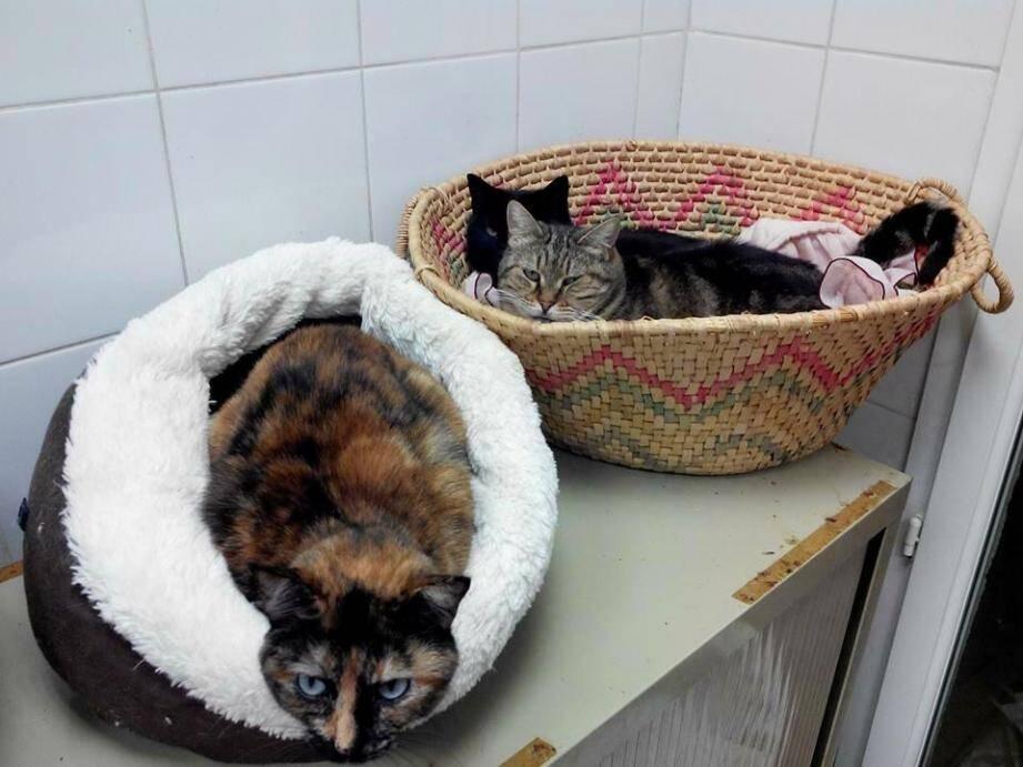 Naturellement, les chats réduisent leurs sorties par temps froid.(DR)