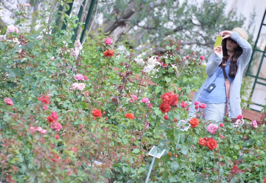 Le gel n'a pas malmené la Roseraie Princesse-Grace et ses centaines de variétés de fleurs.