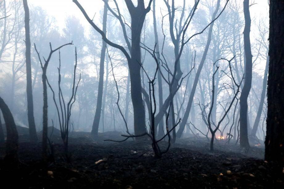 L'avenir de la forêt incendiée au cœur d'une passionnante conférence ce vendredi soir au foyer rural du village.