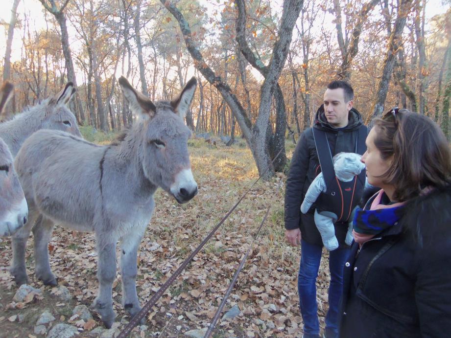 Ils font maintenant partie du paysage au cœur du massif forestier de la Sine. Ces ânes sont également très utiles.