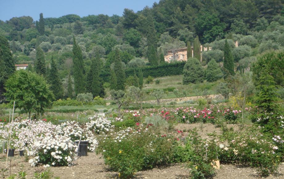Les jardins du musée international de la parfumerie proposent une promenade délicieuse parmi les champs de plantes à parfum de notre région.