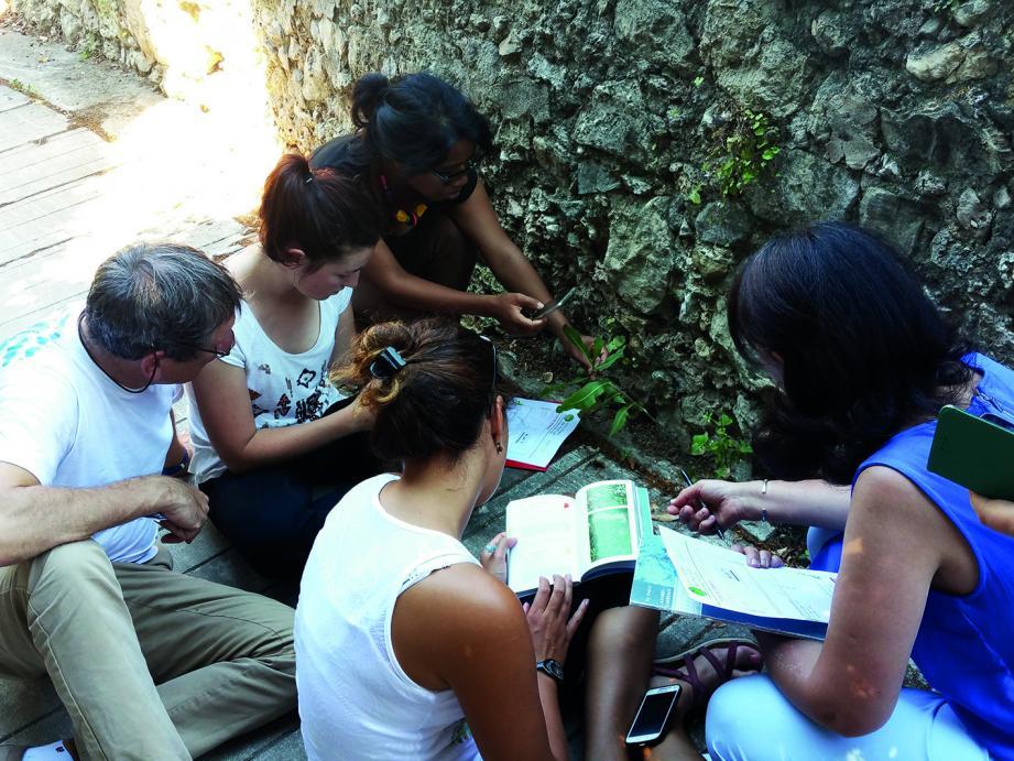Des balades seront organisées dans les rues à la recherche des plantes sauvages.(DR)