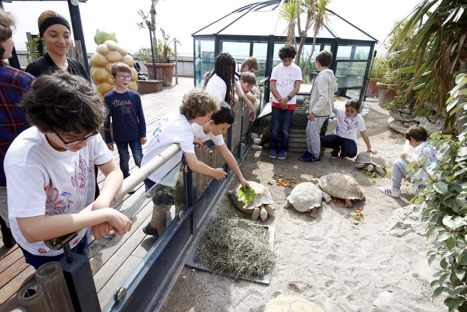 Les jeunes stagiaires peuvent découvrir tortues luth, tortues imbriquées et autres tortues franches.