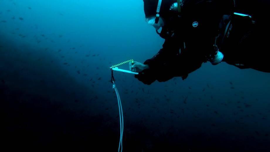 Ces plongeurs font remonter leurs observations aux chercheurs de l'Université de Nice Sophia Antipolis et aux gestionnaires des Zones Natura 2000.