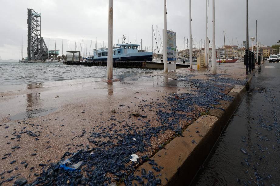 Le port de La Seyne.