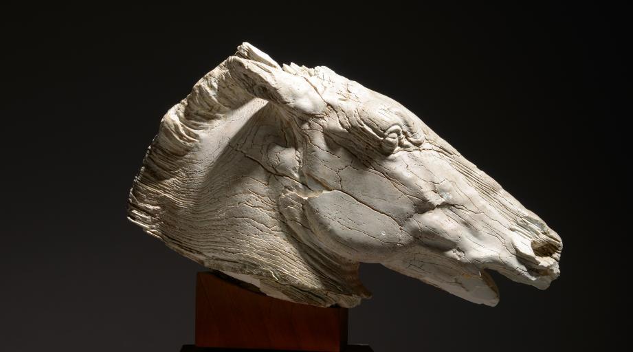 La tête de cheval en ivoire a été adjugée 170 000 e au marteau. (©HVMC)