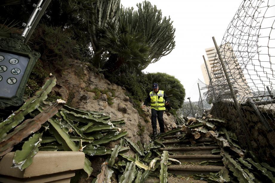 Les photos prises après l'accident, montrent l'ampleur de l'arbre aux branches nombreuses qui a cédé pour une raison encore indéterminée.
