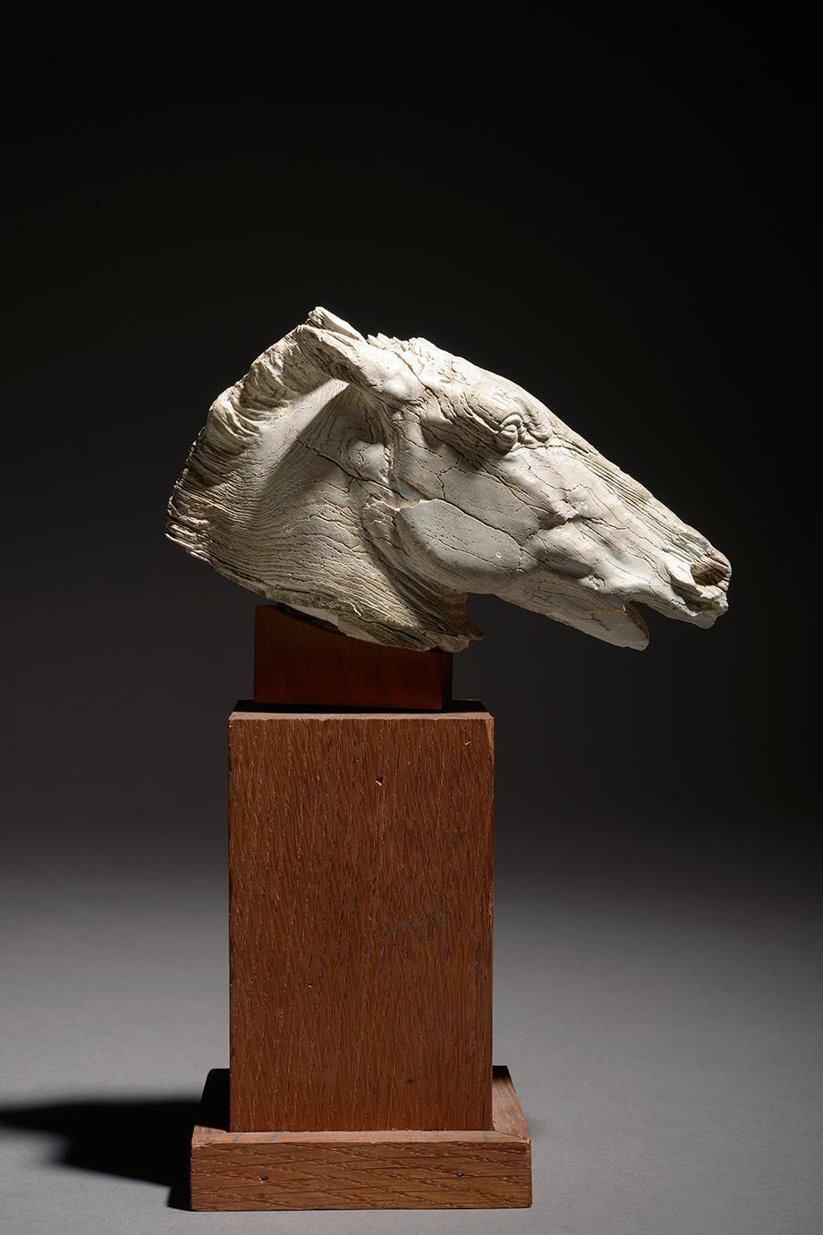 C'est la première fois qu'une pièce en ivoire aussi importante est mise sur le marché.