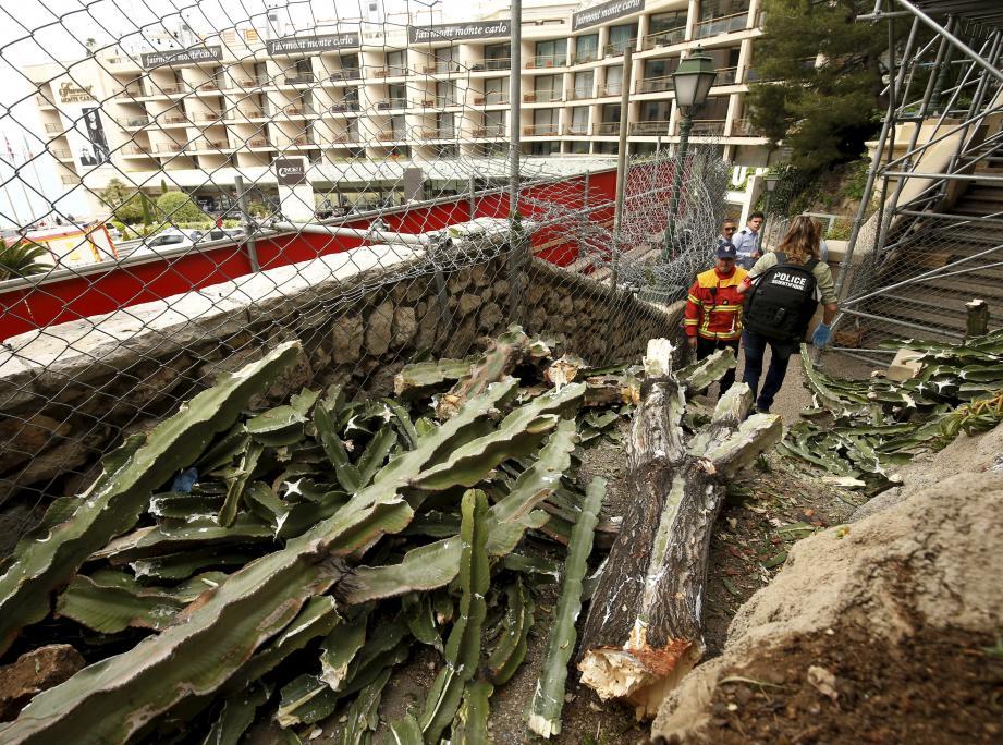 Une partie d'un gros cactus est tombée sur des passants dans l'escalier reliant le Fairmont au Buddha-Bar.