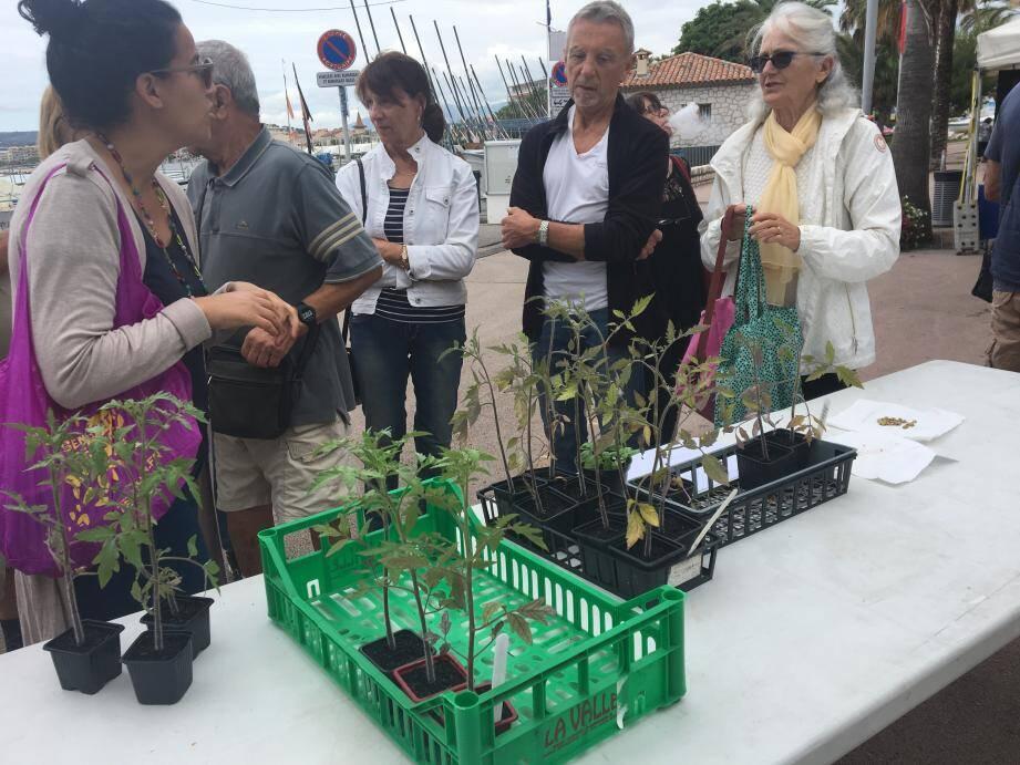 Les Cagnois ont profité de cette bourse aux plantes pour se transmettre leurs conseils. Un événement organisé pour la première fois par la mairie qui compte bien renouveler l'événement.
