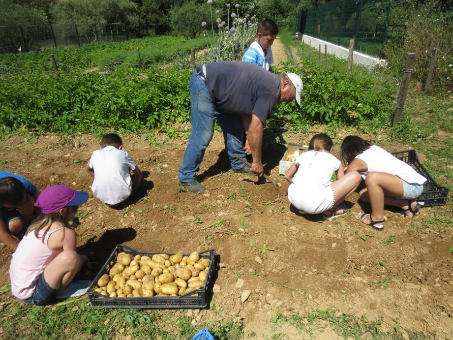 Les enfants ont ramassé les légumes qui leur seront servis sous forme de soupe au pistou à la cantine. Un repas en circuit très très court.
