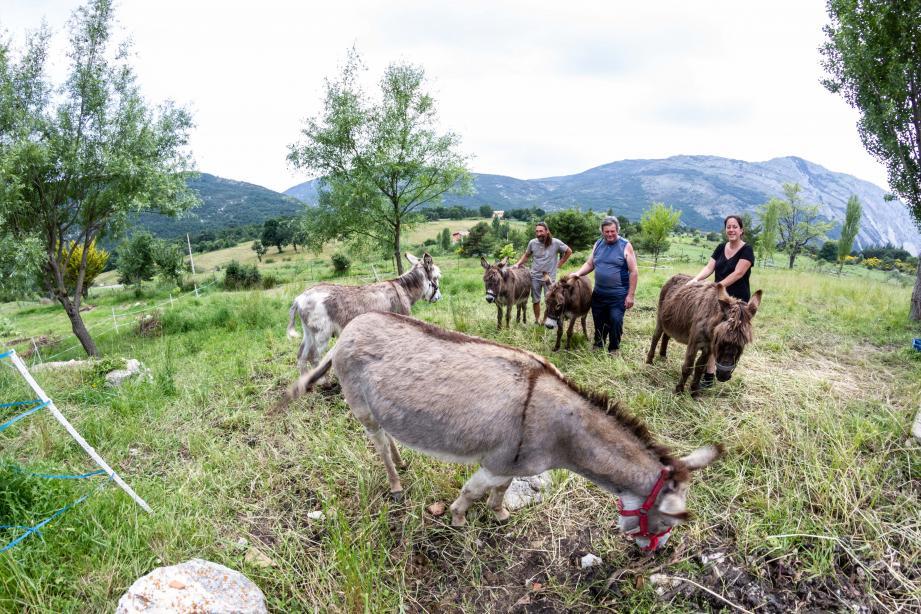 Les bénévoles, ici de gauche à droite, Pierric, Joël et Coralie, sont aux petits soins toute l'année pour les ânes de l'association.