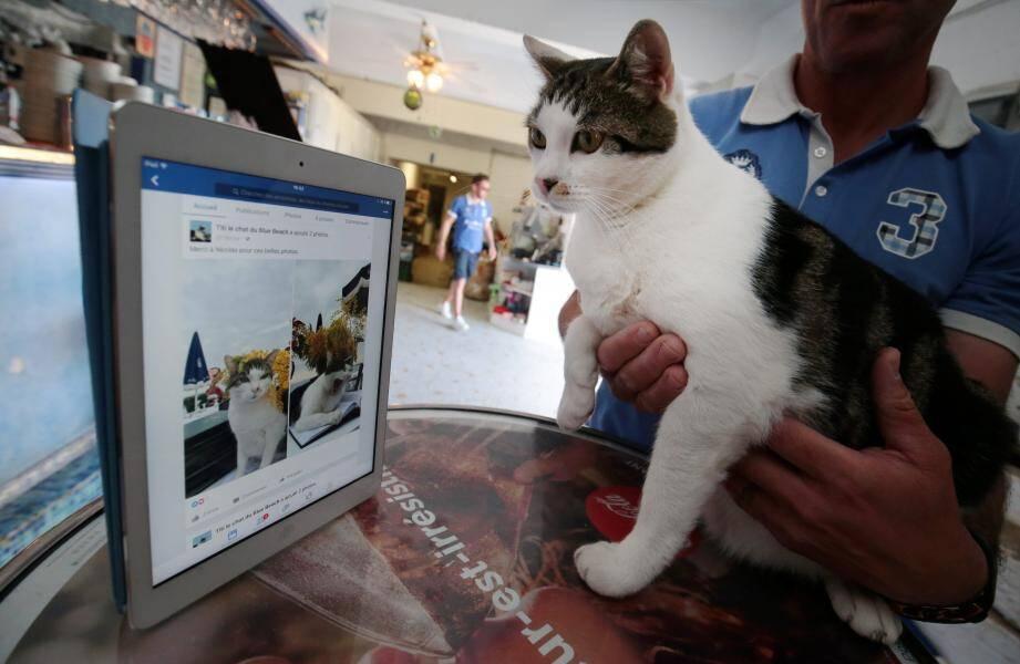 Le chat du Blue beach est une célébrité: il a même sa page Facebook.