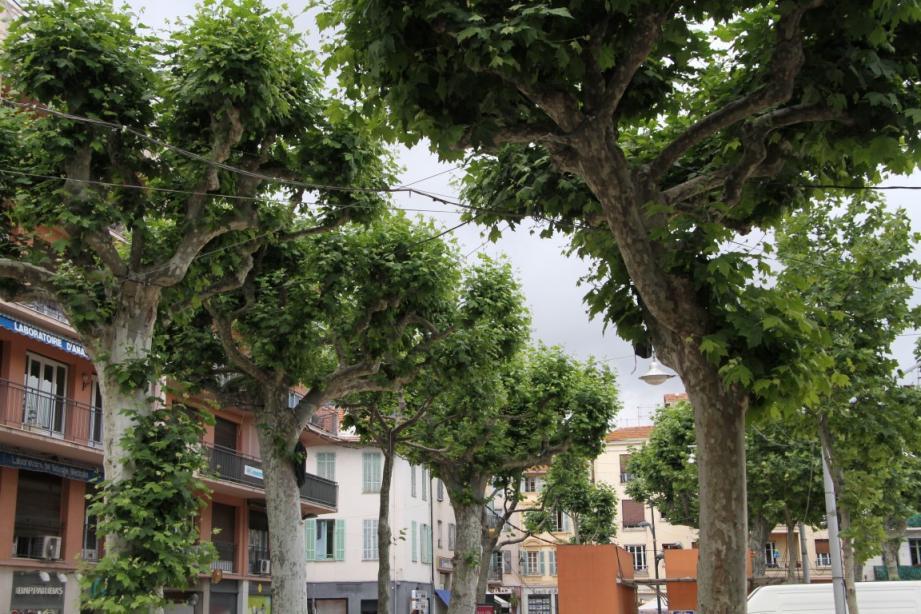 La mairie de Vence utilise un traitement bio contre le Tigre du platane.