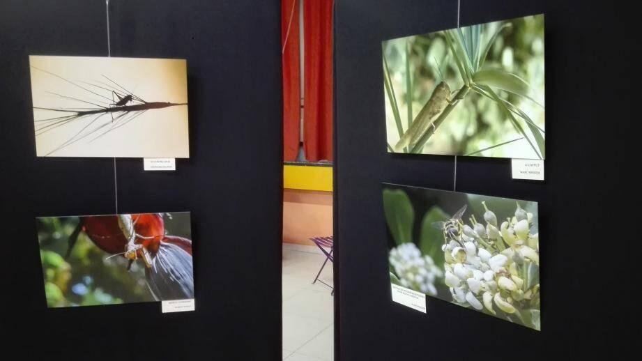 Plusieurs photos d'insectes prises sur le vif ont surpris le public.