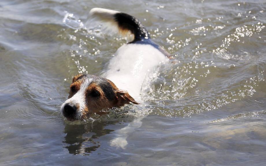 N'oubliez pas de bien rincer voire de shampooiner vos animaux après quelques coups de pattes en mer