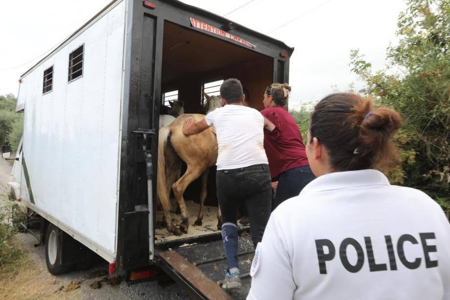 Les animaux ont été confiés à des familles d'accueil.