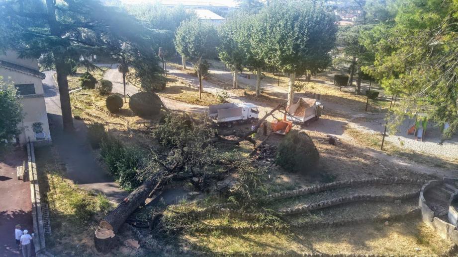 Un cèdre d'envergure abattu dans le jardin de la gare à Draguignan