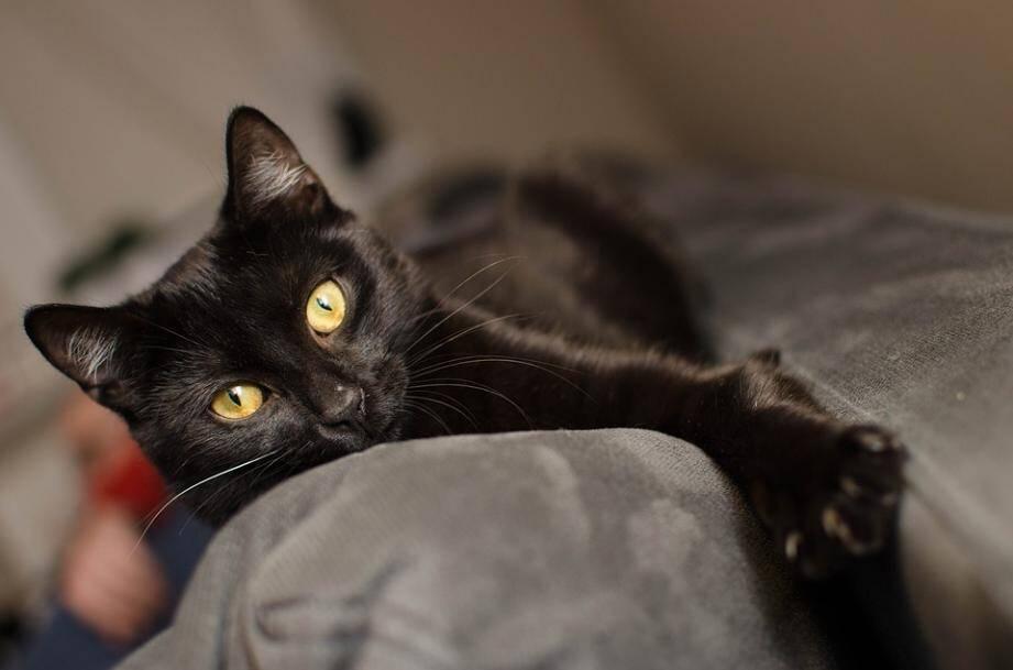 Nos internautes sortent les griffes pour défendre les chats noirs.