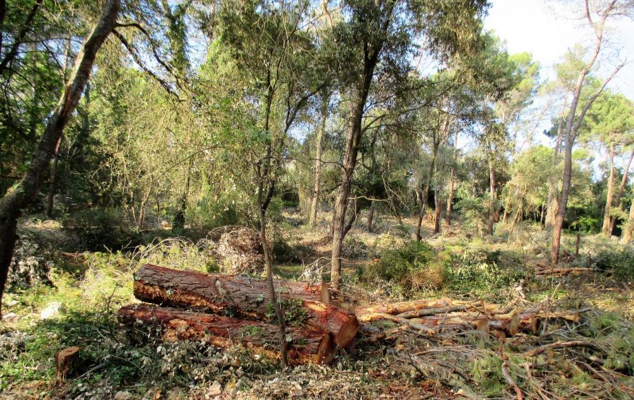 13 hectares de la forêt de la Valmasque ont été livrés aux tronçonneuses.