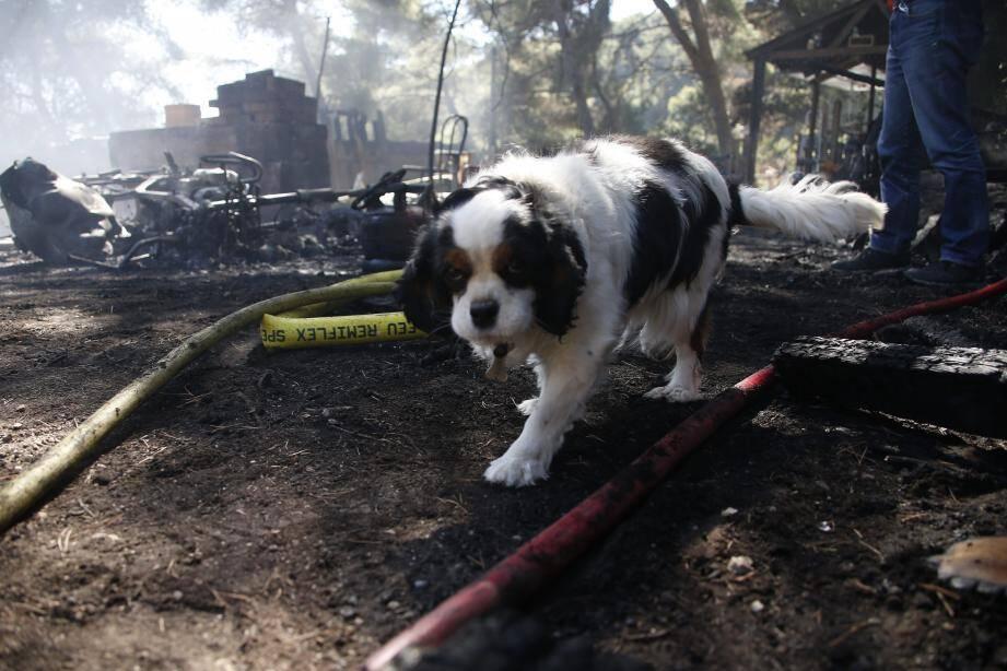 Ce chien a pu être sauvé par les pompiers.