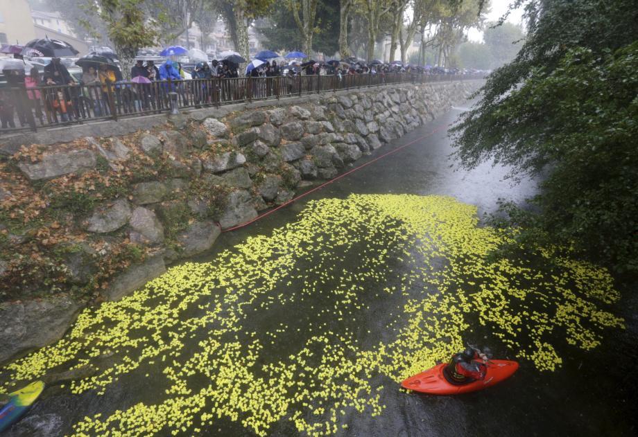 Tout le monde n'a pas fait le canard hier pour la Duck Race : malgré la pluie, les spectateurs sont venus nombreux.