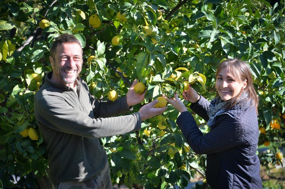 Le couple Sacchelli produit des citrons, mais aussi du miel.