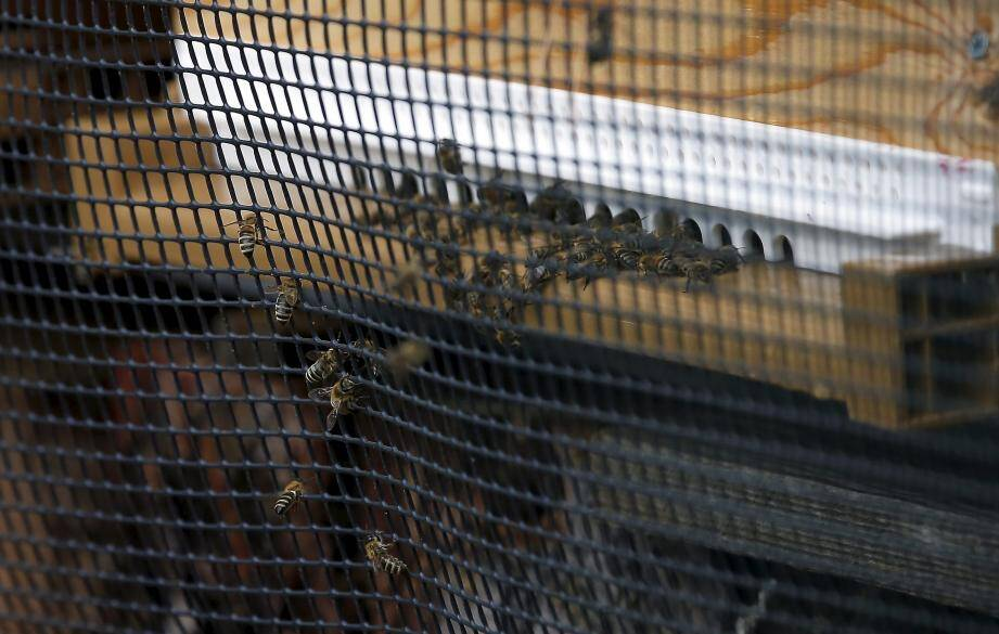 Six ruches viennent d'être installées sur le site du jardin Serre de la Madone.