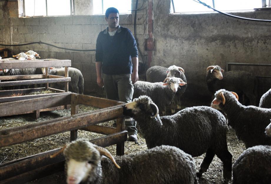Le jeune éleveur, Jérôme Jourdan, au milieu de ses brebis.