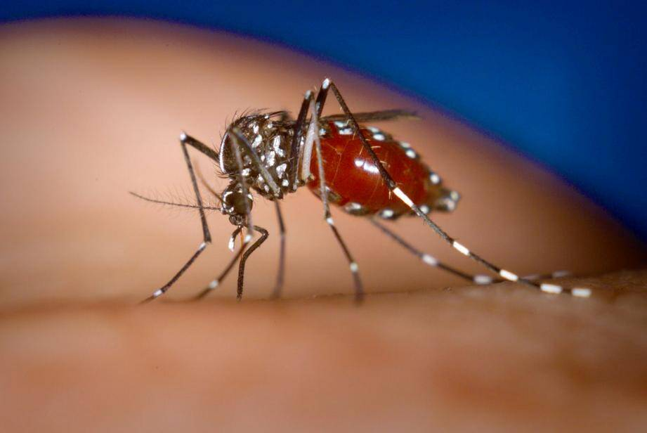 Le climat méditerranéen devient tropical et permet le développement et la transmission de maladie inconnue en métropole grâce au moustique tigre présent dans le sud, depuis maintenant de nombreuses années. À Saint-Laurent, les cinq personnes contaminées vivent près de la rue Desjoberts.  (DR)