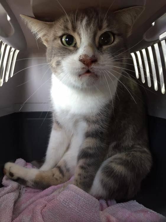 Grisouille a été retrouvée sur la place du Mail dans une poubelle, sous un tas d'ordures, une corde au cou, avant d'être conduite chez un vétérinaire. Mais les dernières nouvelles ne sont pas bonnes...