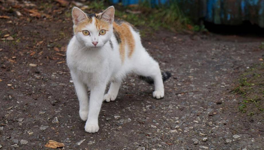 Au Broc, de nombreux villageois n'osent plus laisser sortir leurs chats.