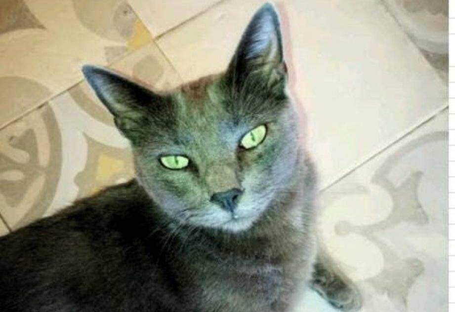 Le chat Lully, victime d'importantes blessures, revient de loin.