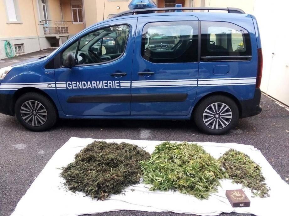 Interpellé en flagrant délit, le jeune homme a reconnu qu'il cultivait du cannabis chez lui.