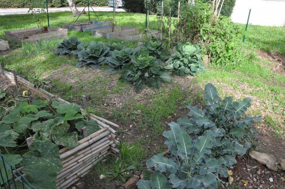 Au jardin partagé, de magnifiques légumes de saison, sans pesticides et dans le respect de l'environnement poussent avec bonheur.
