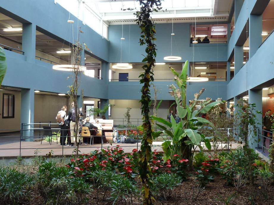 Pour choisir les espèces du patio, l'architecte s'est inspirée du parc Phœnix.