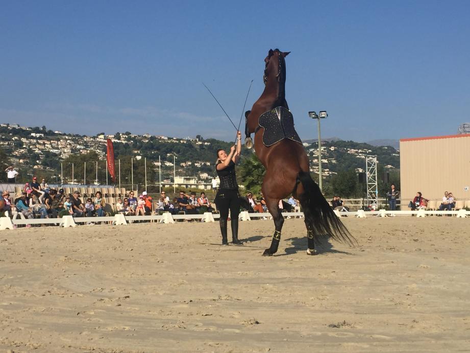 Cabrer un cheval est une figure toujours aussi impressionnante et appréciée du public.
