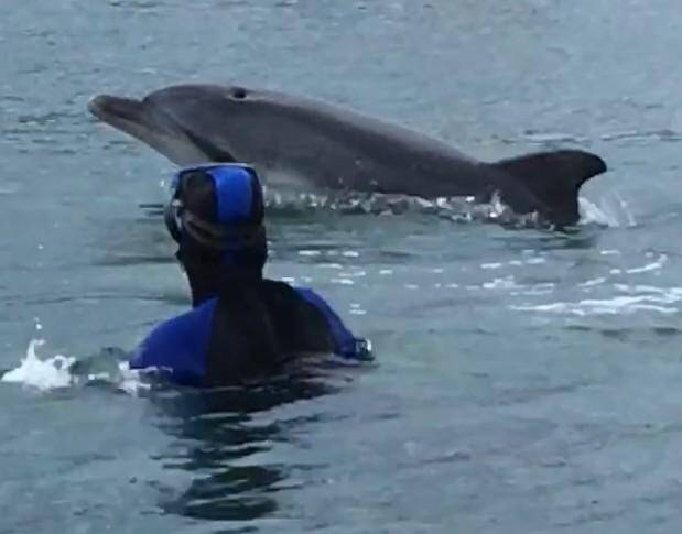 Chaque jour, le dauphin vient rendre visite aux plongeurs et promeneurs du port.