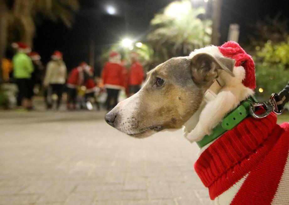 Pour que les fêtes d'années aient du chien : suivez le guide !