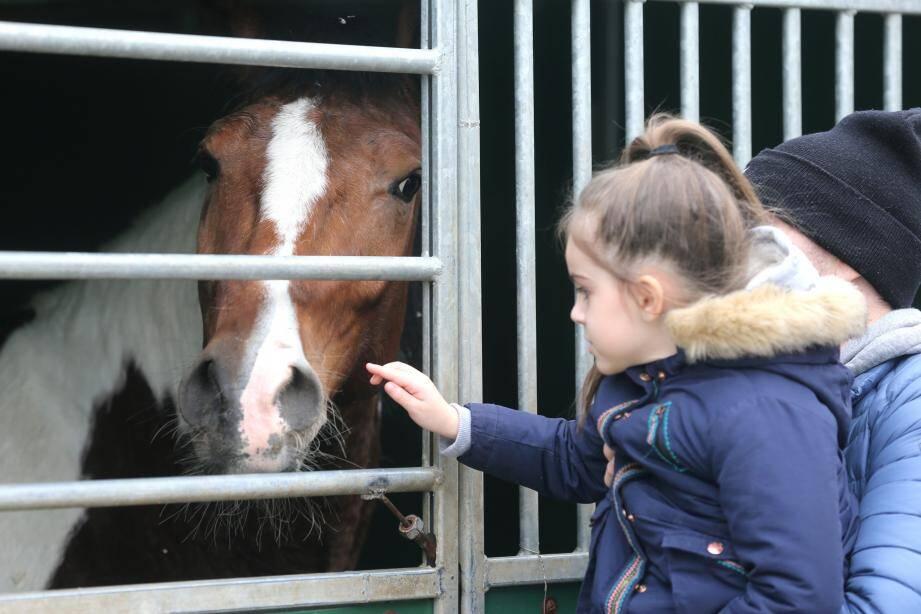 Les visiteurs ont pu observer de près les animaux du cirque : chevaux, félins, éléphants et bisons…