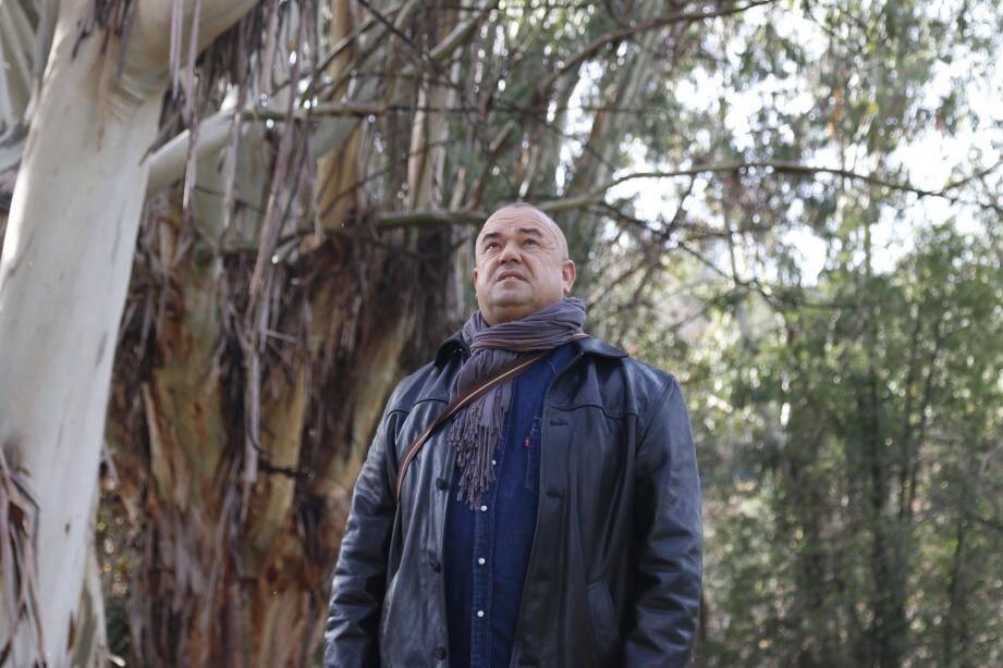 Ahmed Alexandre Dakiche guette la cime de l'un des immenses eucalyptus qu'il a vu grandir, enfant, sur l'ancien camp de harkis de Sophia Antipolis.