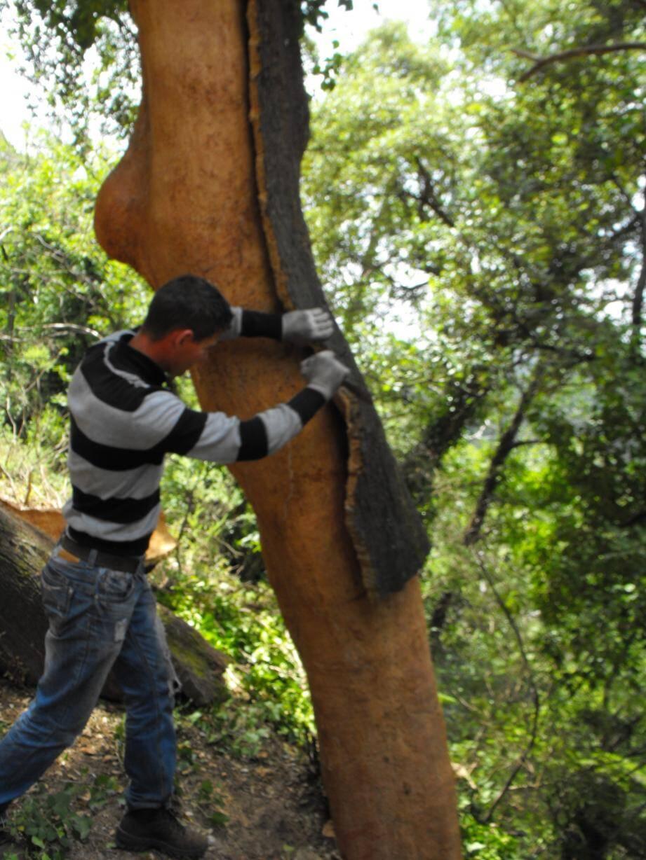 L'Espace jeune La Passerelle propose la découverte des métiers de la forêt aux jeunes et adultes, avec la visite du centre forestier La Bastide des Jourdan, lors des portes ouvertes le 2 février prochain.