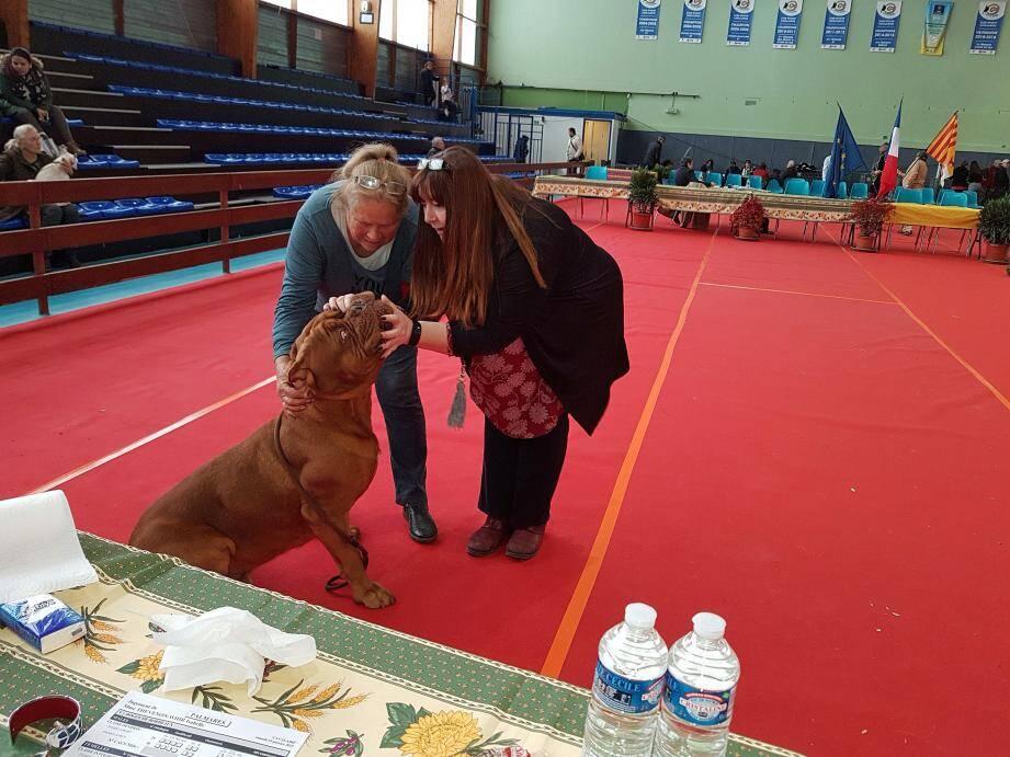 Examen des dents d'un jeune Dogue de Bordeaux par la juge Isabelle, à droite.