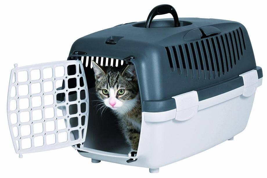 Mieux vaut une cage en plastique qu'un panier pour transporter l'animal.