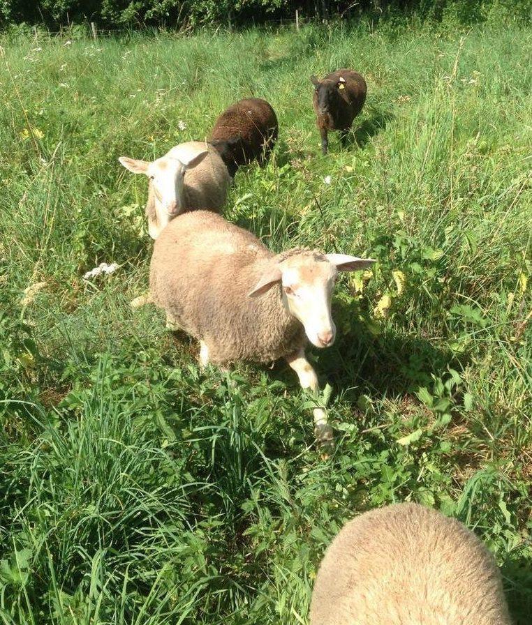 Le POPI vise à prendre en compte les contraintes des éleveurs afin de donner plus d'ampleur au pastoralisme sur le territoire du Golfe.